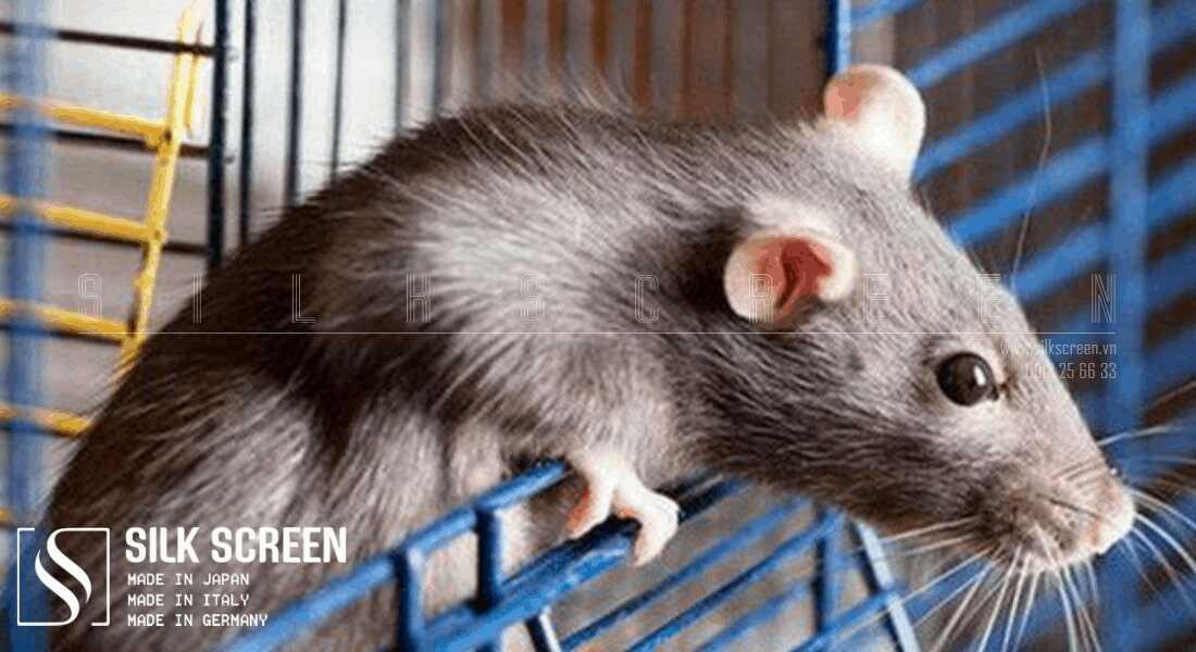 lắp cửa chống chuột