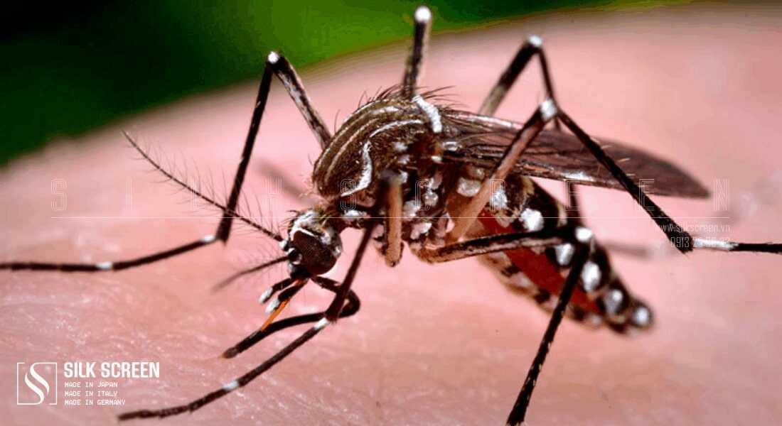 muỗi cắn phải làm sao