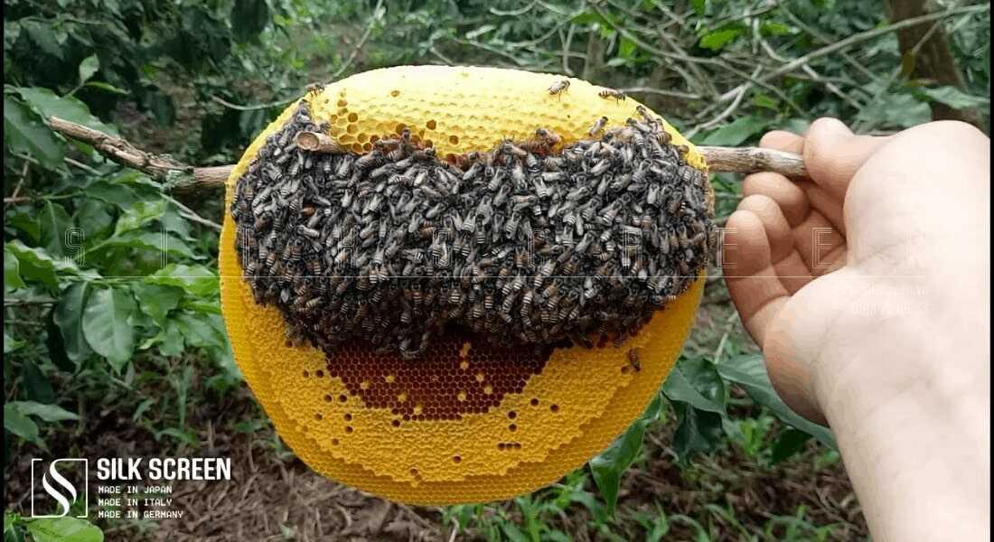 ong ruồi lấy mật