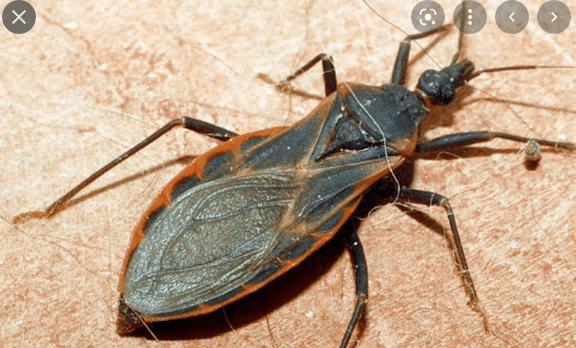 Cách diệt bọ xít hiệu quả nhất